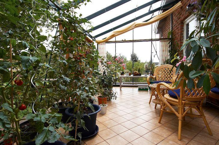 Ett helglasat uterum kan användas också som växthus för att odla ätbara läckerheter. Här i familjen Walderös uterum. I taket finns tyggardiner som enkelt kan dras för med hjälp av linor när solen blir för het.