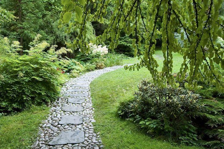 Vackrare kan knappast en gång göras. Stora trampstenar av skiffer lagda i en gång av små kullerstenar under grenarna från en stor katsura, Cercidiphyllum japonicum. Till höger om gången praktrododendron, Rhododendron yakusimanum. Till vänster om gången plymspirea, Aruncus dioicus. Bild från japanska trädgården i Norrvikens trädgårdar utanför Båstad.