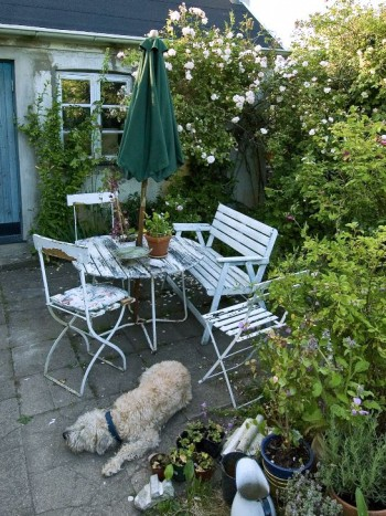 En pittoreskt nött liten sittplats i hörnan invid uthuset, i Maria Björklunds trädgård norr om Ystad, är populär både hos människor och djur. Familjens hund passar på att ta sig en tupplur på de solvarma stenplattorna. Underbart blommande gammaldags rosor skänker väldoft och romantisk stämning.