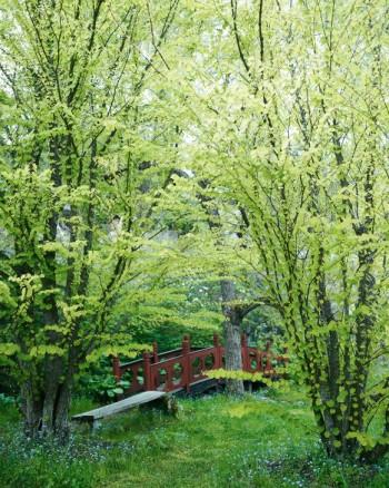 En variant av enkelhetens skönhet finns på Bastedalens Kinapark inte långt från Vätterns strand. Under två katsuror kan man vila på en enkel träbänk. Går utmärkt att göra hemma om man har naturtomt. Den röda kinesiska bron i bakgrunden kan vara svårare att få till.