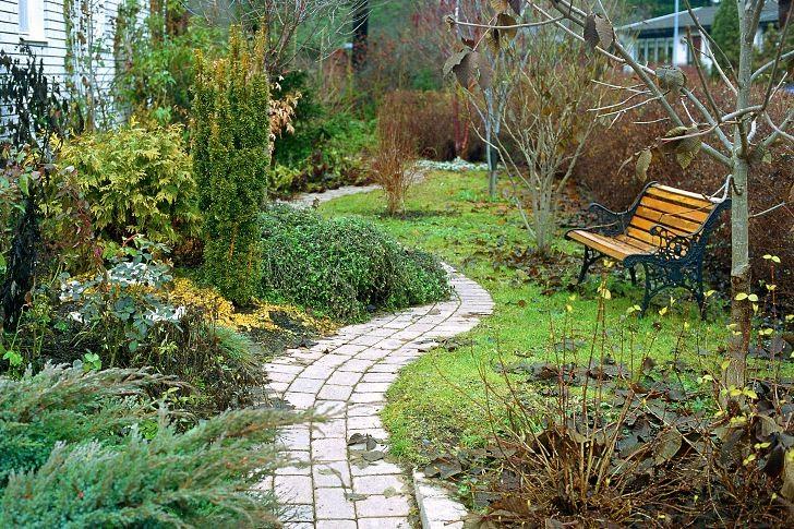 Entrén ska gärna ha något att bjuda på året om. Här vår egen entréträdgård en disig senhöstdag då de vintergröna växterna tillsammans med vackra stammar och grenverk får stå för trädgårdsupplevelsen. Under den avlövade årstiden framträder också planlösningen tydligare. Stark tredimensionell form i trädgårdens uppbyggnad är en ovärderlig tillgång under den kala årstiden.