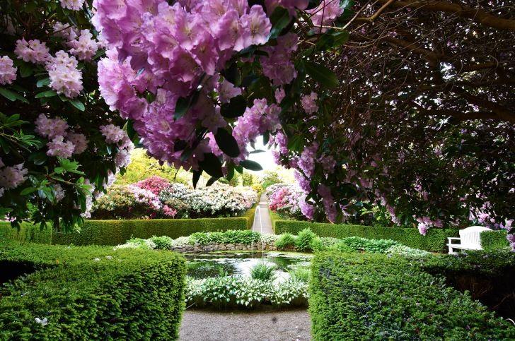 Rododendron som tak, Krapperups slott.