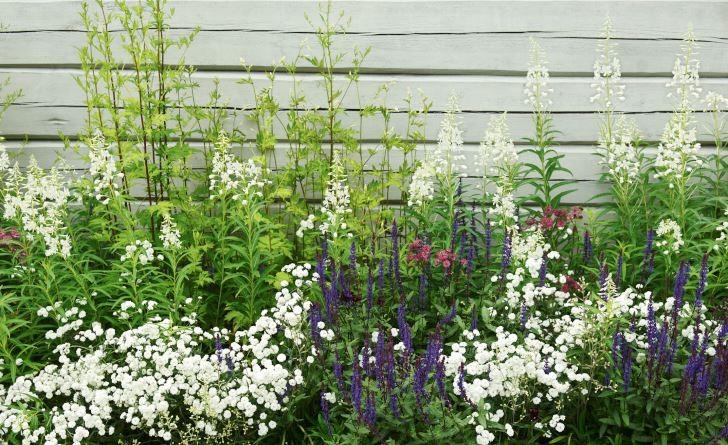 Hos den välkände landskapsarkitekten Ulf Nordfjell återkommer de ljust grå väggytorna både i hans idéträdgård på Göteborgs botaniska och, som här, i Wij trädgårdar i Gästrikland. Växtvalet passar perfekt i den dämpade stilen med bland annat stäppsalvia 'Caradonna', vitpytta 'Boule de Neige' och vitblommig mjölke.