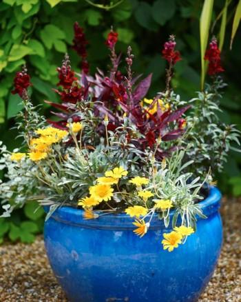 Köp några hyggligt uppvuxna ettåriga plantor och plantera i krukor, snyggt snabbt och enkelt. Men lura er inte, för att det ska vara trivsamt i trädgården behövs det också perenner, buskar och träd. Det är i en redan skön trädgårdsmiljö krukorna kommer till sin rätt.
