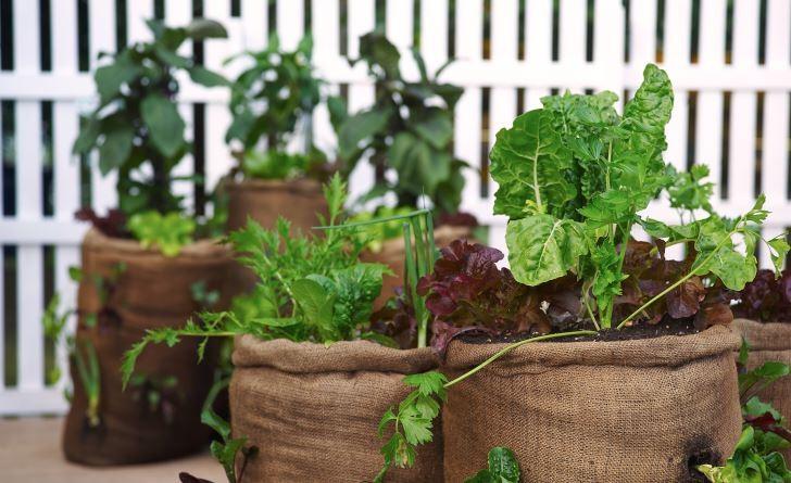 Grönsaker i säckar av juteväv blir otroligt snyggt.