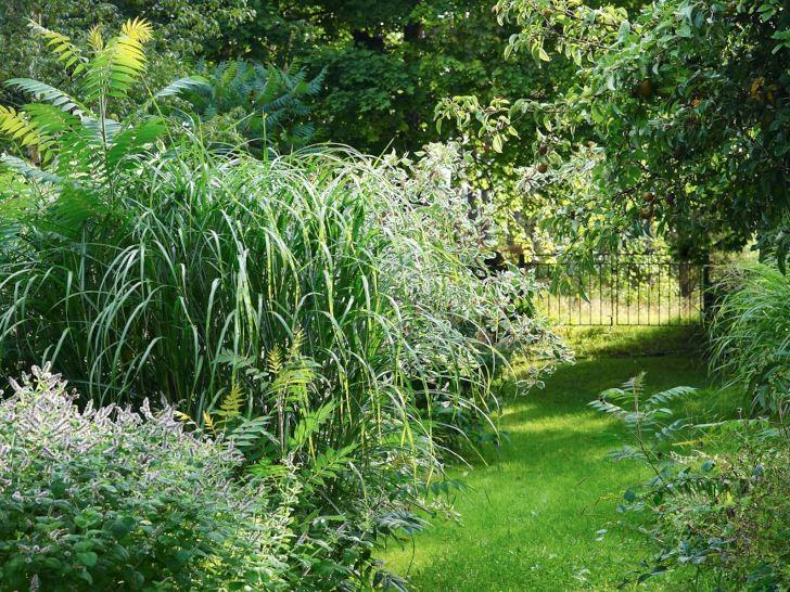 Den lantliga trädgårdens huvudingredienser väl samlade. Till vänster om gräsgången rejäla perenner som klarar sig själva, som anisisop, Agastache foeniculum, och glansmiskantus, Miscanthus sinensis. Mellan dem pressar den invasiva rönnsumaken, Rhus typhina, upp sina vackra skott. Till höger mognar päron.