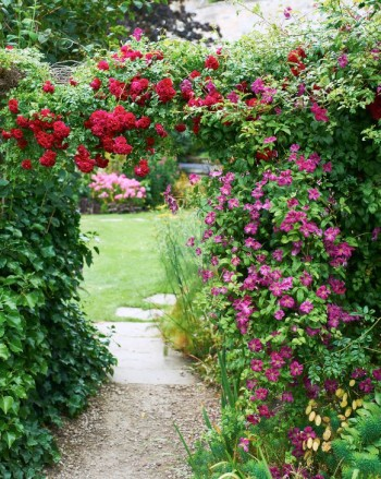 Rosor och klematis i the Mill Garden, Warwick