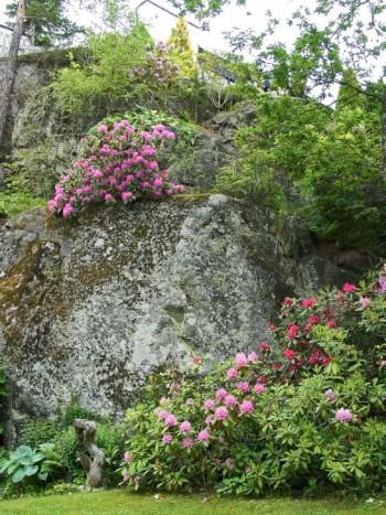 Högt uppe på bergsavsatserna breder ståtliga rododendronbuskar ut sig med blommor i rosa och röda nyanser. I området med mer jord nedanför berget växer även funkior och strutbräken.
