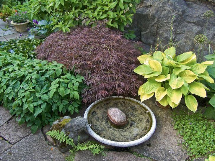 Ett enkelt fågelbad med en flat sten, så att fåglarna lätt kan ta sig upp, är tillsammans med väl valda växter och en mossbeklädd betonggroda ett attraktivt blickfång i Laila Lindströms radhusträdgård på Lidingö. Växternas effektfulla färg- och formkombinationerna förstärker kompositionens lyskraft.