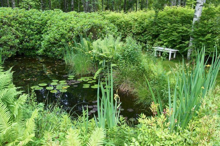 """I makarna Dunérs trädgård """"Drömmens"""" i Småland uppstod en nästan naturlig damm på ett ganska naturenligt vis. En traktor råkade köra fast när marken var blöt och sumpig efter mängder av regn. Traktorn grävde ner sig själv så djupt att den fick bärgas. Hålet vattenfylldes. Paret Dunér anpassade sig till ödet, drog om loppet på en naturlig rännil så att den passerade hålet, planterade passande växter och, vips, ett alldeles eget vattenhål."""
