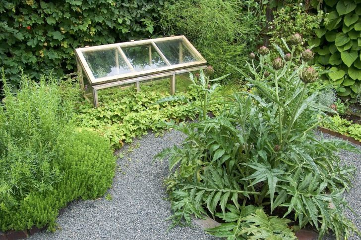 På en mycket liten yta har Yvonne Fröman skapat en fantastisk liten skyddad köksträdgård med sydeuropeisk karaktär. En ståtlig kronärtskocka i egen rundel i gruset ger det lilla trädgårdsrummet mycket av dess speciella karaktär. Det lilla minidrivhuset i odlingsbädden är både dekorativt och praktiskt att ha när man vill sätta fart på små plantor.