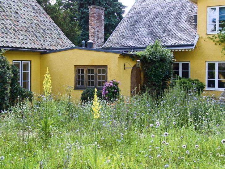 Allt passar en skönhet sägs det, och det gäller nog putsade hus också. På Maryhill i Lund blommar de självsådda ängsblommorna, toppade med jättekungsljus, mellan innergårdens gatstenar. Lite olika varje år men alltid lika vackert.