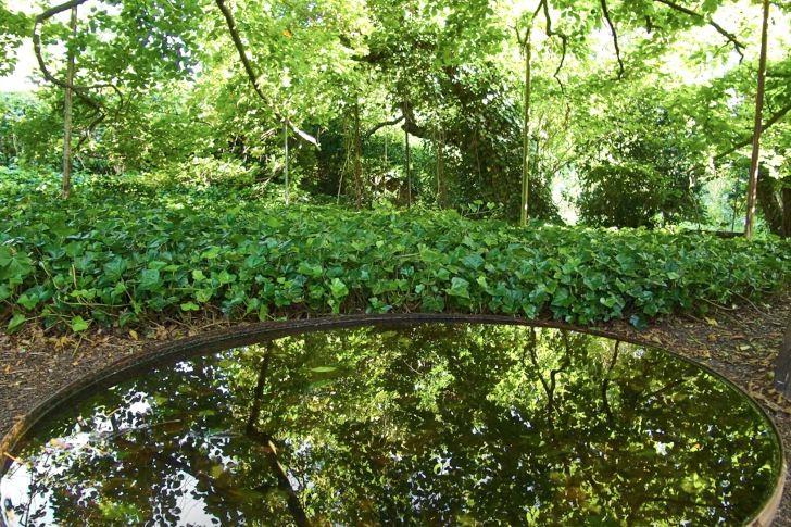 Reflexionerna i den stilla vattenytan förstärker ytterligare skönheten och ståtligheten hos de omgivande träden i Per Fribergs trädgård i Bjärred, Skåne. Den mörka botten på det breda men grunda fatet ger en klar ostörd reflex och skapar en illusion av djup.