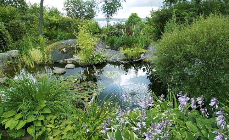 Inbäddad mellan miljöskapande växter, berghällar och en strand av fint grus ligger trädgårdsdammen som en återspegling av Mälarens vatten en bit bort. Här hos makarna Wåhlin i Skokloster kan man känna igen samma princip som i Norrvikens trädgårdar, även fast inte dammens och Mälarens vatten inte flyter samman helt och hållet från en viss betraktelsepunkt.