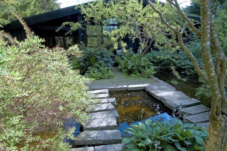 Stora stramt formade vattenspeglar förstärker ljuset i den arkitektoniskt formstarka norra trädgården på Villa Fraxinus i Ångermanland. Till huset tar man sig antingen via huvudgången som döljs av spireabusken, till vänster, eller via stora rustika granitblock som bildar broar över dammens stilla vatten. Under små träd av fjäderkaragan, Caragana arborescens 'Lorbergii', växer plymspireor, Aruncus dioicus, strutbräken, Matteuccia struthiopteris, och funkior.