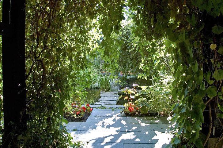 Engelmannsvin och pipranka klär in husets fasader och pergolor i den södra trädgården. Det känns exotiskt att inifrån huset blicka ut över gården genom valv och draperier av frodiga klängväxter.