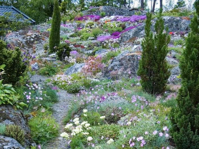 De pelarformade barrväxterna skapar intresse på höjden och blir en effektfull kontrast mot de lågväxta blommande kuddarna på berget.