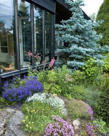 Trots att marken lutar brant bort från fönstren har Karin lyckats skapa en god kontakt mellan ute och inne. De lite högre växterna syns väl inifrån det generösa vardagsrumsfönstret och skapar trädgårdskänsla även inomhus.