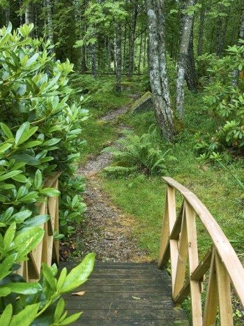 När man sprungit över bron i kanten av Drömmens trädgård kommer man in på skogsstigen, en liten bit vågar man nog gå på den.
