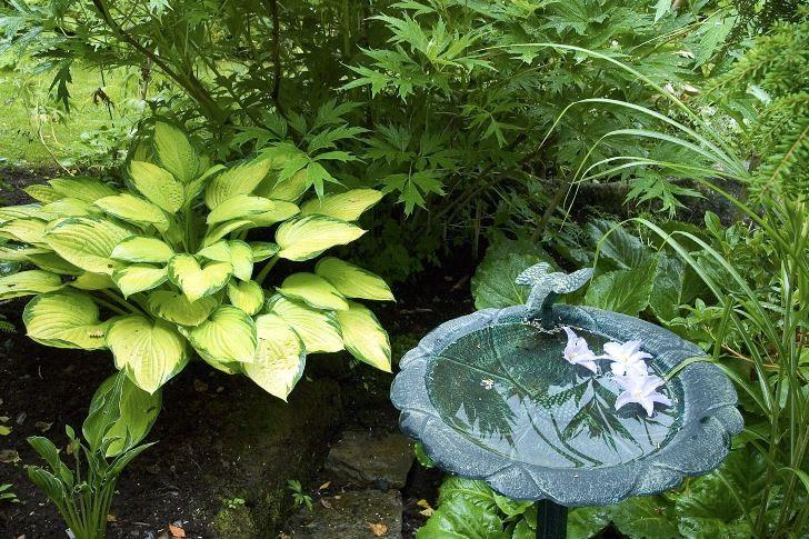 Ett metallfågelbad på fot skapar romantisk atmosfär i Kerstin och Pär Stawåsens trädgård i Veddige, Halland. Tre vita liljeblommor på vattenytan förhöjer ytterligare intrycket. Funkians limefärgade blad skapar behagfull färgkontrast gentemot fågelbadet blågröna nyans.