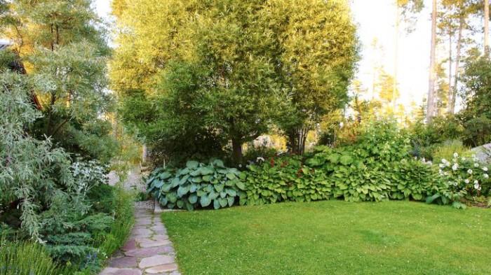 En gång av oregelbundna kalksandstensplattor leder från uteplatsen till parkeringen som döljs av den frodiga växtligheten. Under klotpilarnas, Salix fragilis 'Bullata', hopväxta kronor börjar en vidsträckt perennrabatt som ramar in den smaragdgröna gräsmattan på husets baksida.