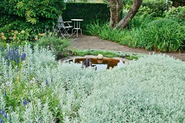 Silver: vitmalört, Artemisia ludoviciana, 'Silver Queen'