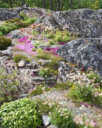 Växtligheten breder ut sig och man får vara försiktig när man tar sig fram över berget. Även mitt i steget på den lilla oregelbundna stentrappan har växterna slunkit sig in. De minimala gångstigarna består av grus i vilket bergets växter frösår sig ymnigt.