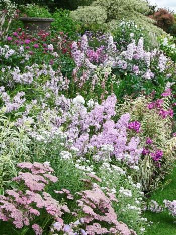 Ljuvhet: praktröllika, flox, mjölkklocka, riddarsporrar och temynta i Wollerton Old Hall Garden, Shropshire, England.
