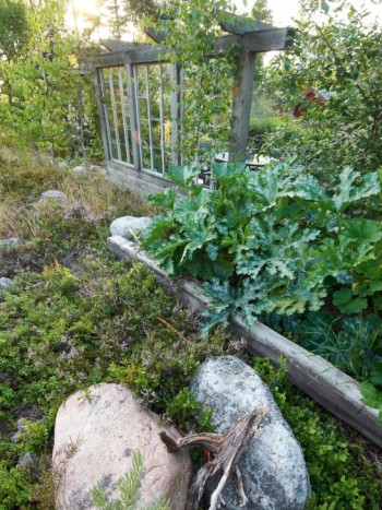 Vid kanten av skogen i närheten av uteplatsen med fönstervägg, växer squash i sin låda. Stora exotiska blad utgör en läcker kontrast mot den karga naturens växter, stenar och knotiga rötter.
