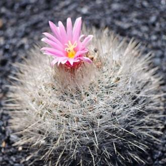 Kaktusar med färg och form − Jardín de Cactus