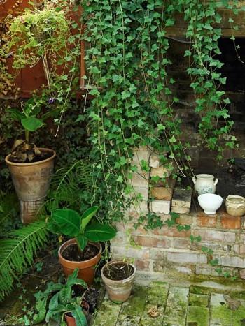Ena hörnet av uterummet med en omisskännlig känsla av charmigt övervuxen trädgårdsruin
