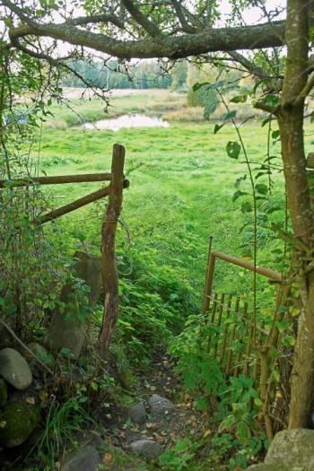 Den naturliga dammen och ängarna genom en öppning i buskaget.