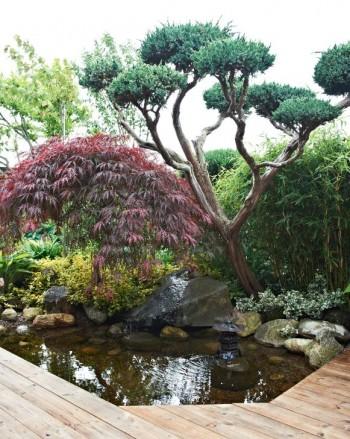 Dammen och trädäcket har bara några få år på nacken. Med inspiration från japansk beskärningskonst har Nils-Olof klippt fram svävande bollar på den kinesiska enens toppar, en typ av jättebonsai. Under växer en flikbladig japansk lönn av sorten 'Garnet'.