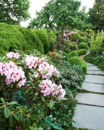 Längs det smala området mellan hus och och gräns har Nils-Olof lagt en gång, omgiven av bland annat rododendron. Den som blommar i läckert rosa till vänster bär namnet 'Humboldt'.