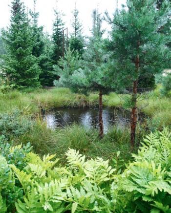 Även myrlandskapets lilla göl återfinns i stiliserad form i Skogens trädgård. I förgrunden pärlbräken, Onoclea sensibilis. Att vattnet även kommer ner från himlen passar bara in i bilden.
