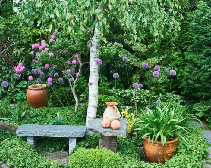 Runt en kraftigt beskuren björk skapade Nils-Olof ett formstarkt konstverk. Bänk och bord ger horisontella linjer, purpurlökens stjälkar och björken vertikala. Runda är buxbom, terrakottakrukor och purpurlökens blommor.
