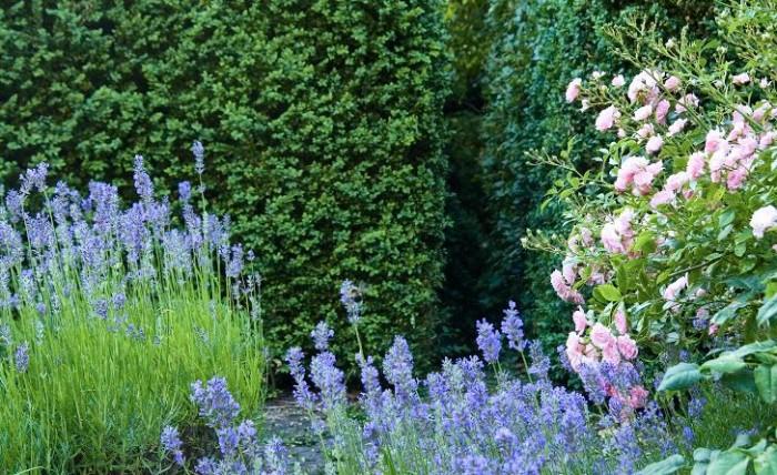 Ser det inte spännande ut så säg? Genom en smal öppning i buxbomshäcken kan man komma från rosengården och vidare ut i den stora vilt betonade västra trädgården.