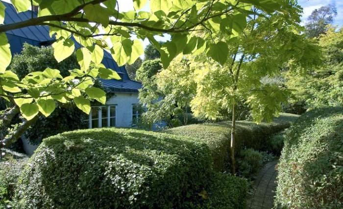 Precis som ett hus byggs en trädgård av tak, väggar och golv. Hemma hos landskapsarkitekten Gunnar Martinsson syns samspelet mellan de tre tydligt. Här används klippta ligusterhäckar inte bara för att skapa rum och horisontella linjer utan också för att ta upp nivåskillnaderna i den sluttande trädgården. Vackra träd med exotiskt utseende skapar verkningsfulla kontraster i färg och form gentemot häckarnas strikta väggar. Marktegel och effektiva marktäckande växter som golv förstärker rumskänslan ytterligare i denna arkitektoniskt formstarka trädgård. Grenen i bildens förgrund tillhör ett kejsarträd, Paulownia tomentosa (zon1), och lite längre bort till vänster om den smala gången syns ett gulbladigt korstörne, Gleditsia triacanthus Sunburst' (zon 1).