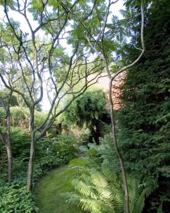 Inte bara stora träd kan användas för att bilda tak. Några uppstammade rönnsumaker, Rhus typhina, bildar ett glest exotiskt tak över gräsgången och de marktäckande växterna hemma i trädgården hos hus- och trädgårdsarkitekten Per Friberg i Bjärred, Skåne.