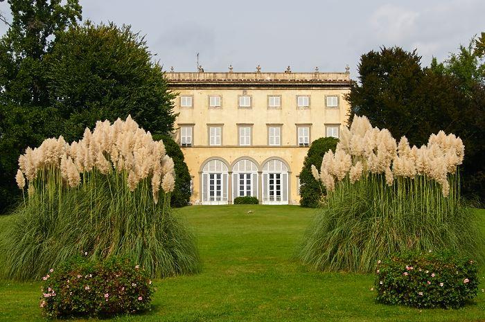 Villa Grabau med pampasgräs, Cortaderia selloana, i förgrunden.