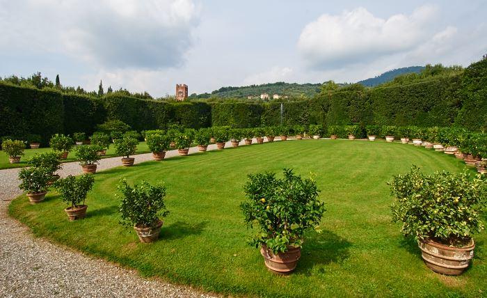 Sjuttio citroner i antika krukor, Villa Grabau, Toscan