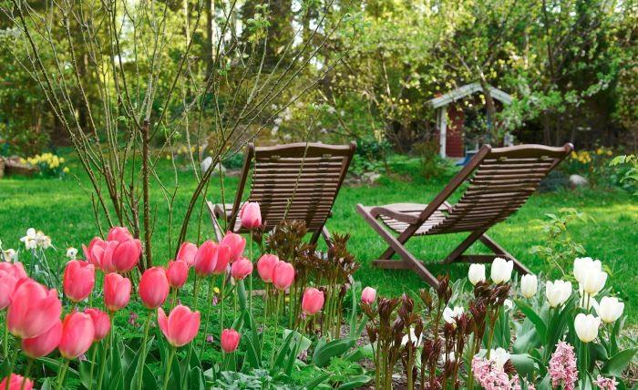 Det är lökväxterna som kommer upp först också i våra egna rabatter under våren, som hyacinten 'Pink Pearl', darwinhybridtulpanen 'Pink Impression' och triumftulpanen 'White Dream'. När de blommat ut kommer snart rabatten att täckas av perenner. Mitt i rabatten de mörkröda, stiliga skotten av pion.