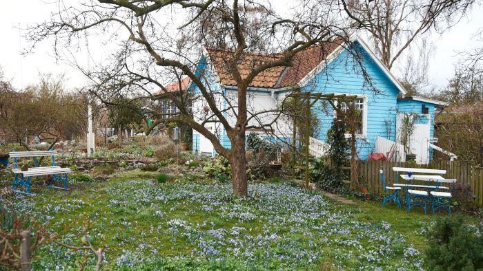 Det är under den tidiga våren som blommande lökar gör oss som allra gladast. Vintergäcken i rabatten har just blommat ut och ersatts av olika vårstjärnor och blåstjärnor (Scilla) i gräsmattan. Snart blommar narcisserna som därefter blir täckta av annan grönska. Bild från Citadellets koloniområde i Landskrona.