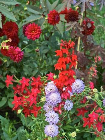 I 2004 års ettåriga plantering på Gustaf Adolfs plan i Enköping arbetade man med en vågad färgskala i olika röda och violetta nyanser. Resultatet blev en enastående häftig rabatt.