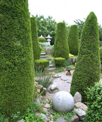 Pelarväxter i Hviids have på Fyn