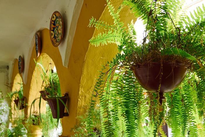 Patios del Alcázar Viejo,San Basilio 14