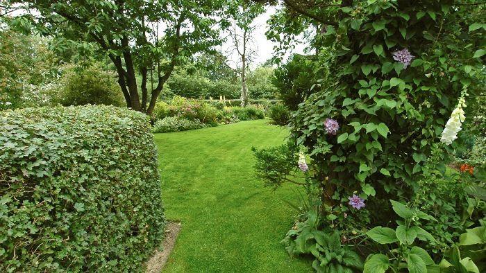 Klippta häckar är bra både som ytterväggar runt trädgården och som avgränsare mellan olika rum inne i trädgården. I familjen Gosvigs trädgård används en häck av hagtorn både som vägg mellan två rum inne i trädgården, syns till vänster i bilden, och som häck i tomtgränsen. Den smala passagen och växtligheten som finns i flera nivåer får det att kännas behagligt lummigt när man står här i skydd av häcken och blickar in över det större trädgårdsrummet.