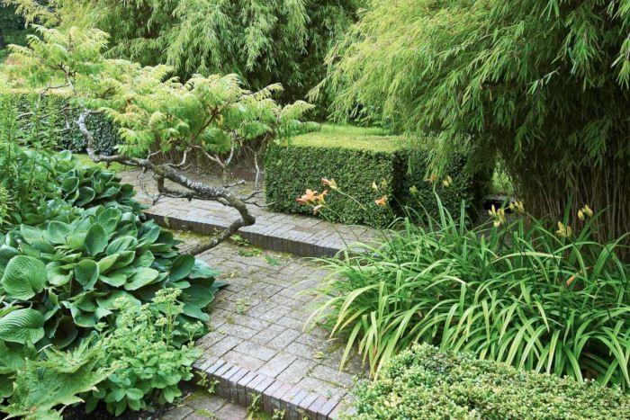 Ett par låga trappsteg i stenbeläggningen skapar genast en känsla av nivåskillnad fast det bara handlar om ett par decimeter. Den här effekten kan man lätt skapa genom att fylla på jord, grus eller sand på en helt plan tomt. Växter av olika form och höjd förstärker den tredimensionella formen och gör det här till en trivsam och lummig oas. Buskarna i bakgrunden är bambu som ger snygg kontrast mot de strikt klippta buxbomskuberna.
