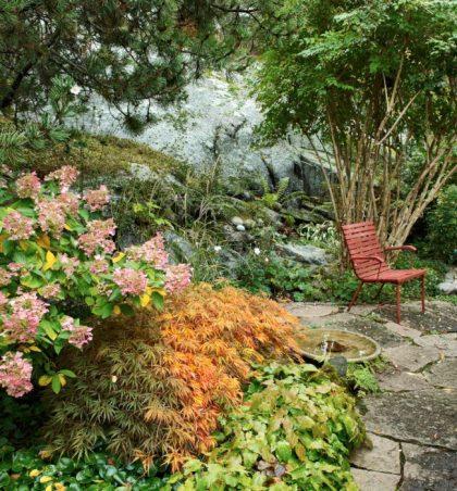 Stol i engelskt rött under uppstammad paradisbuske.