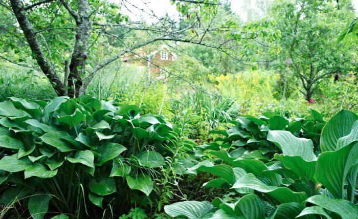 Den naturnära trädgården i Klaas och Bodil van der Geests tolkning